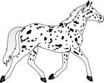 Leopard_150